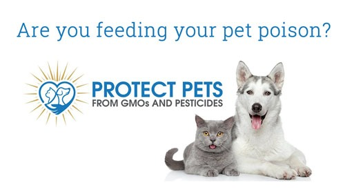 Are you feeding your pet poison?