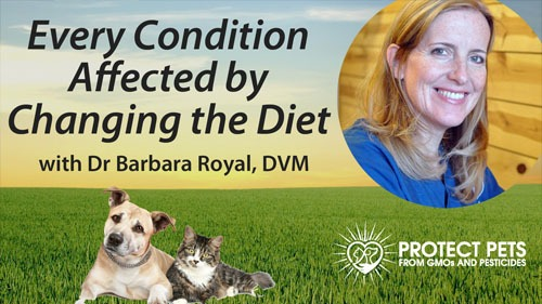Every Condition Affected by Changing the Diet – Interview with Barbara Royal, DVM