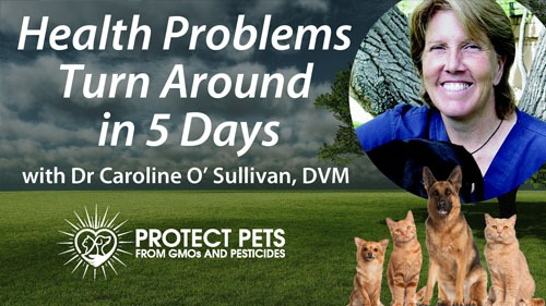 Health Problems Turn Around in 5 Days with Dr. Caroline O'Sullivan, DVM