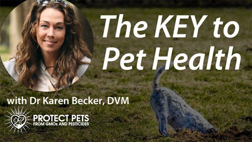 The KEY to Pet Health with Dr. Karen Becker, DVM