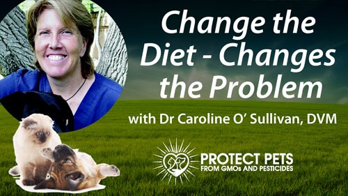 Change the Diet – Changes the Problem: Leaky Gut with Dr. Caroline O'Sullivan, DVM