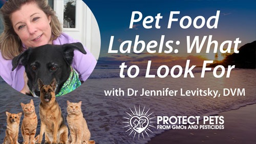 Pet Food Labels: What to Look For with Dr. Jennifer Levitsky
