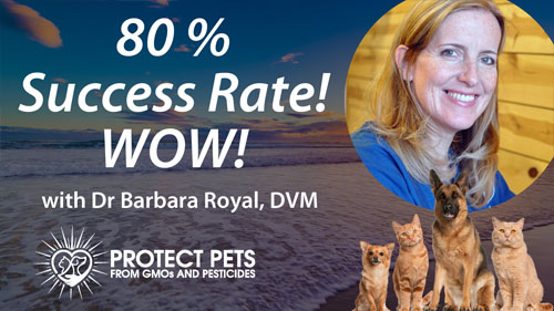 80% Success Rate! Wow! – Interview with Barbara Royal, DVM