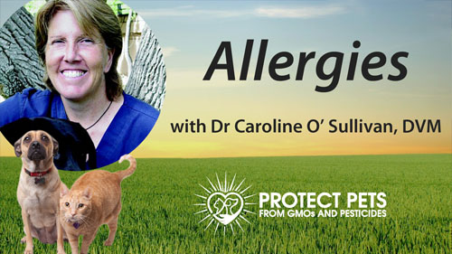 Allergies with Dr. Caroline O'Sullivan, DVM