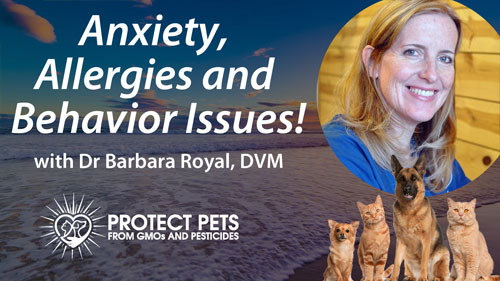 Anxiety, Allergies and Behavior Issues! – Interview with Barbara Royal, DVM