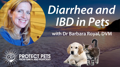Diarrhea and IBD in Pets – Interview with Barbara Royal, DVM