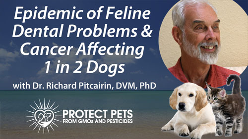 Epidemic of Feline Dental Problems & Cancer Affecting 1 in 2 Dogs with Dr. Richard Pitcairin