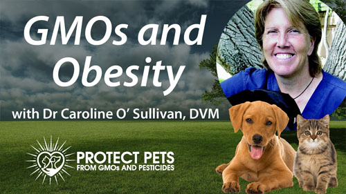 GMOs and Obesity with Dr. Caroline O'Sullivan, DVM