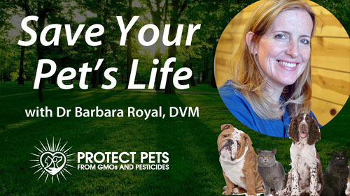 The MOST IMPORTANT thing you can do to Save Your Pet's Life – Interview with Barbara Royal, DVM