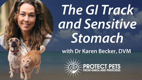 The GI Track and Sensitive Stomach with Dr. Karen Becker, DVM
