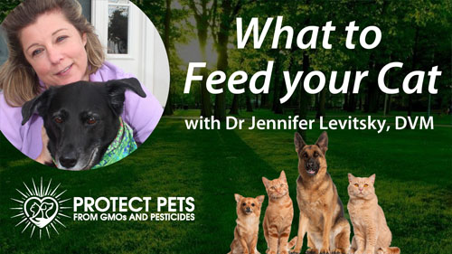What to feed your Cat with with Dr. Jennifer Levitsky